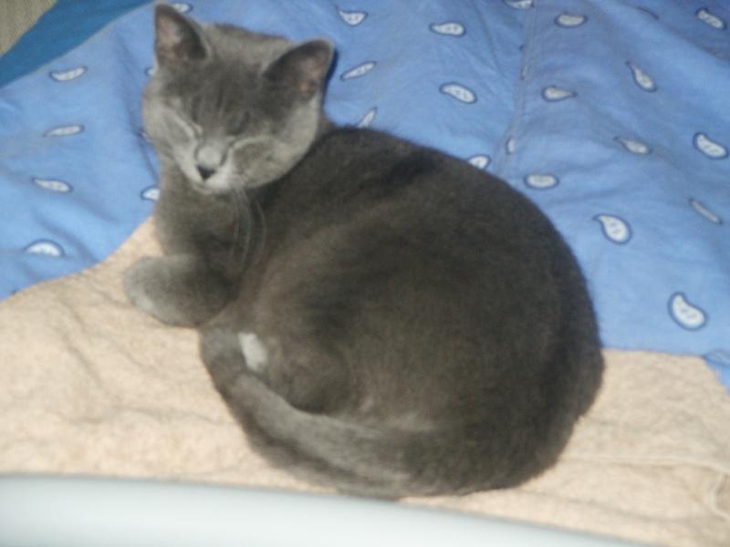 Phébé 8 mois grise bleue Pict0412
