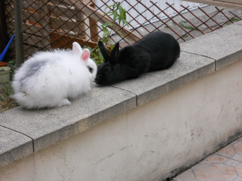 Olive, lapine noire, jeune - Page 13 Dscn5311