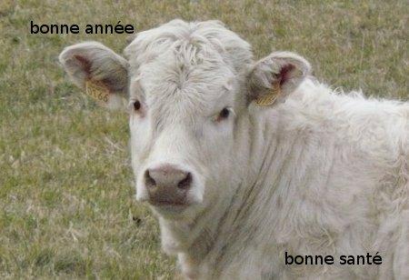 Meilleurs voeux Vache10