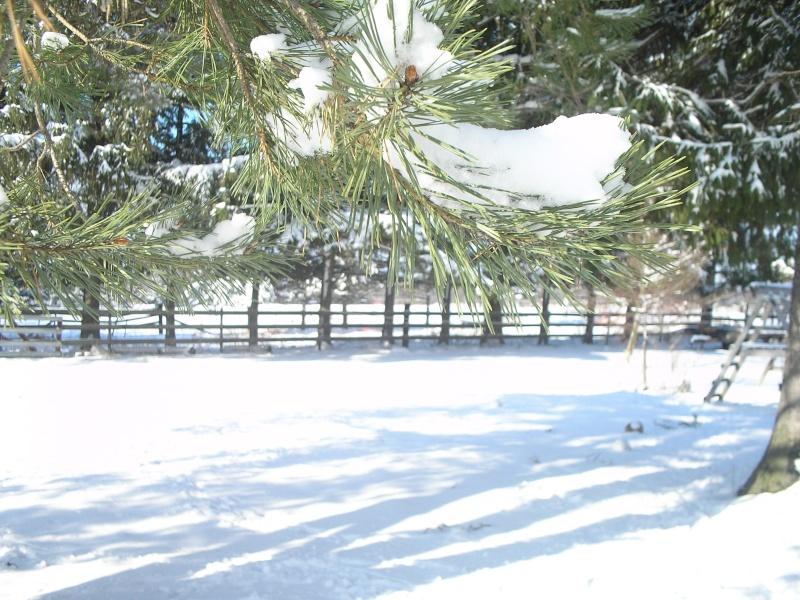 More Snow XD Pc300110