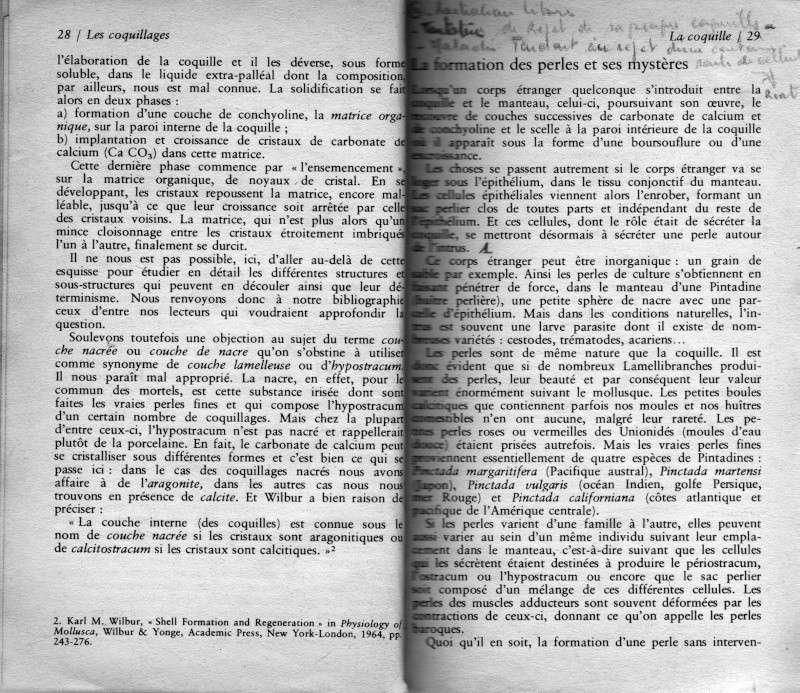 Rostration et nigérisation des Cypraea Rtf210