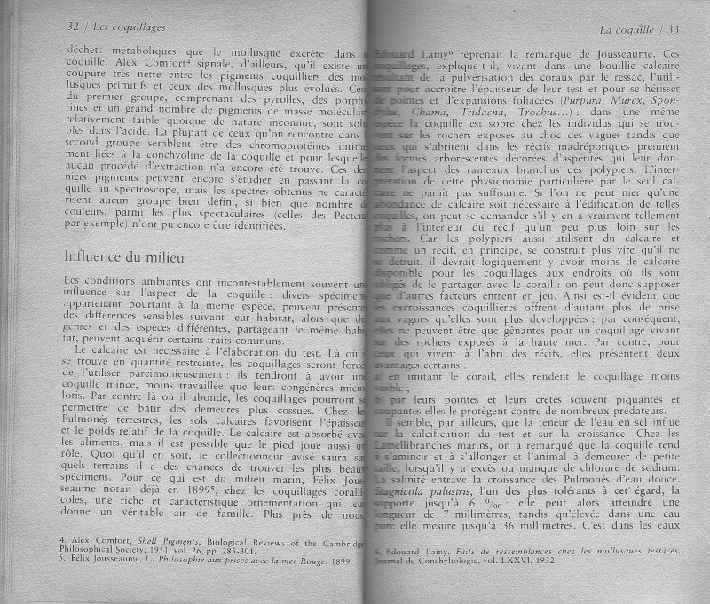 Rostration et nigérisation des Cypraea Rtf410