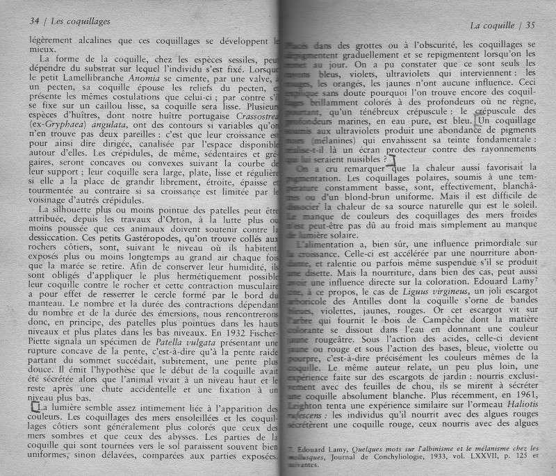 Rostration et nigérisation des Cypraea Rtf510