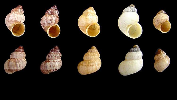 Escargot Pomati10