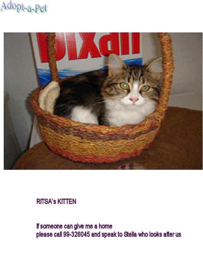 Kitten needs loving home Image110