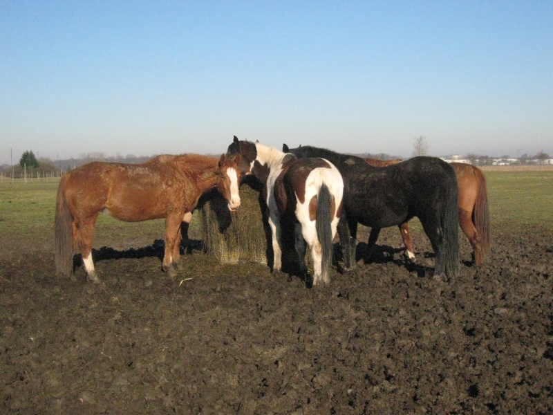 chevaux chasse-mouches Groupe10