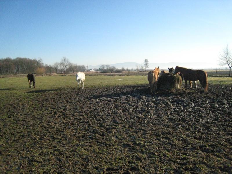 hiérarchie chez les chevaux : à table ! Groupe11