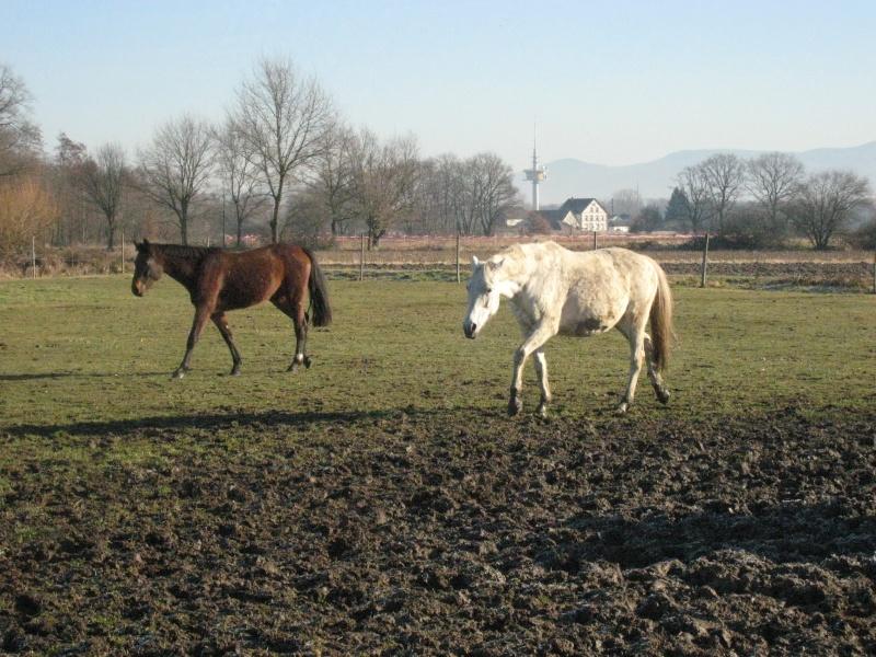 hiérarchie chez les chevaux : à table ! Groupe12