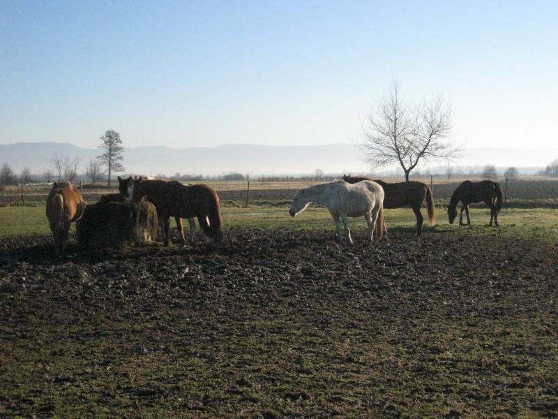 hiérarchie chez les chevaux : à table ! Groupe16