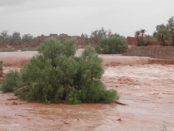 الأشجارPhotos des innondations de fi octobre 2006 à Tinjdad Maroc_10