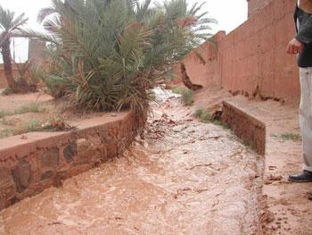 الأشجارPhotos des innondations de fi octobre 2006 à Tinjdad Maroc_11