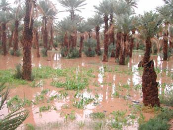 الأشجارPhotos des innondations de fi octobre 2006 à Tinjdad Maroc_12