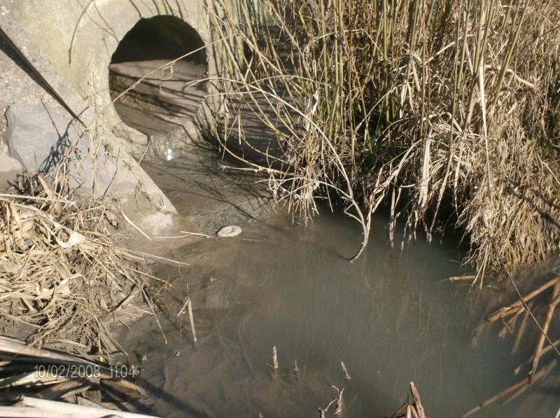 La truite dans la Meuse Hpim0210