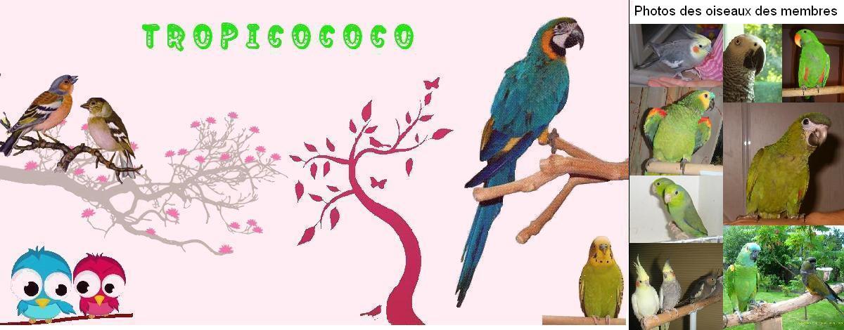 tropicococo