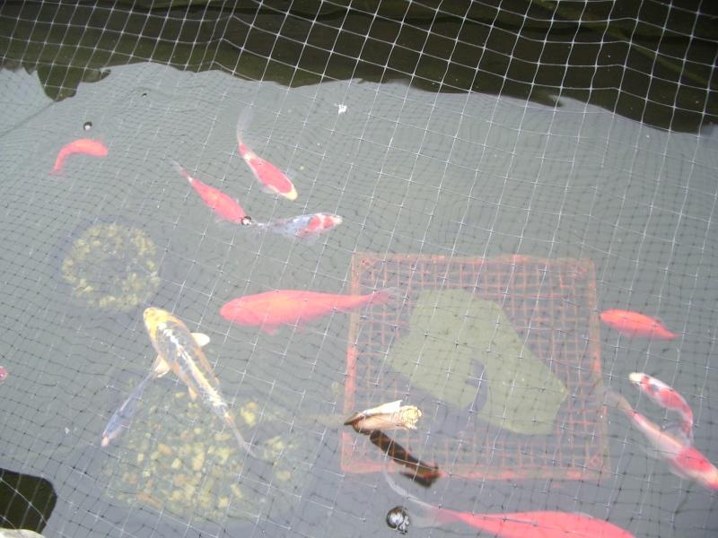 Ponds And Wildlife Imgp0110