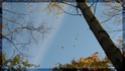 Photo contest - Leaves Lin-fa10