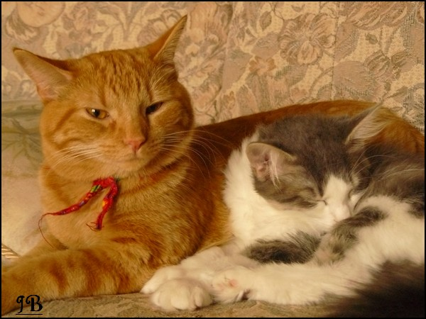 Les chats de ma soeur Photo_15