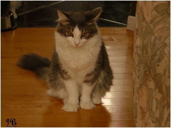 Les chats de mes parents Photo_17