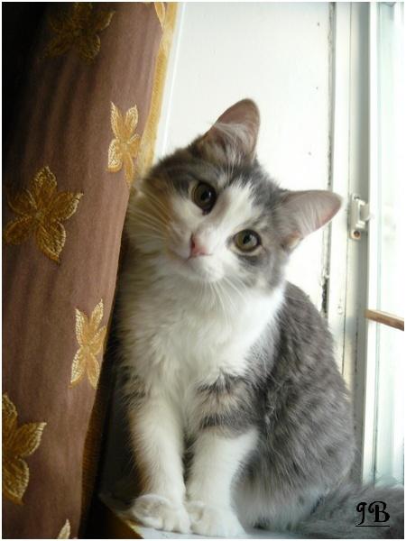Les chats de mes parents Photo_23