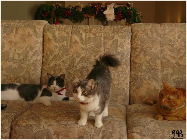 Les chats de mes parents Photo_24