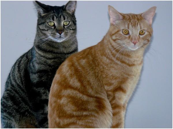 Les chats de mes parents Photo_39