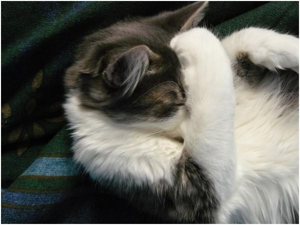 Les chats de mes parents Photo_42