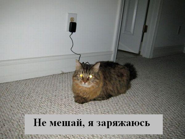 Смешные картинки - Страница 2 Kotota11