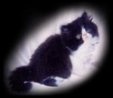 Perzijska mačka Mary_l10