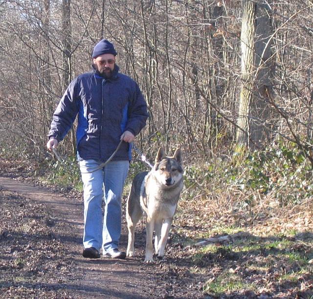 """Photo des """"loups"""" dans la forêt près de Spa Elvis_10"""