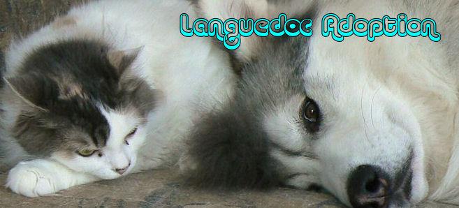 Languedoc adoption
