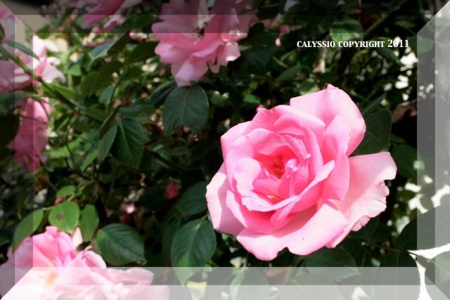 AU BOUT DE LA PLUME ... Pour tous les artistes ... - Portail Rose_310
