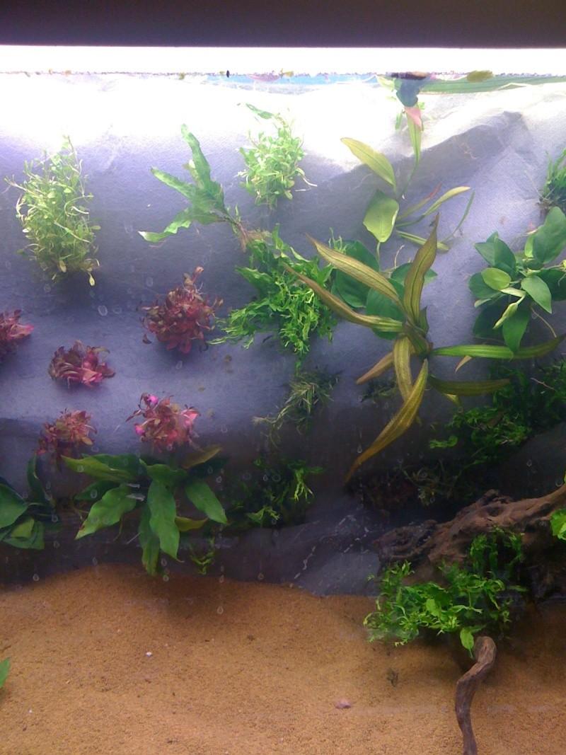Mur végétal immergé 00310