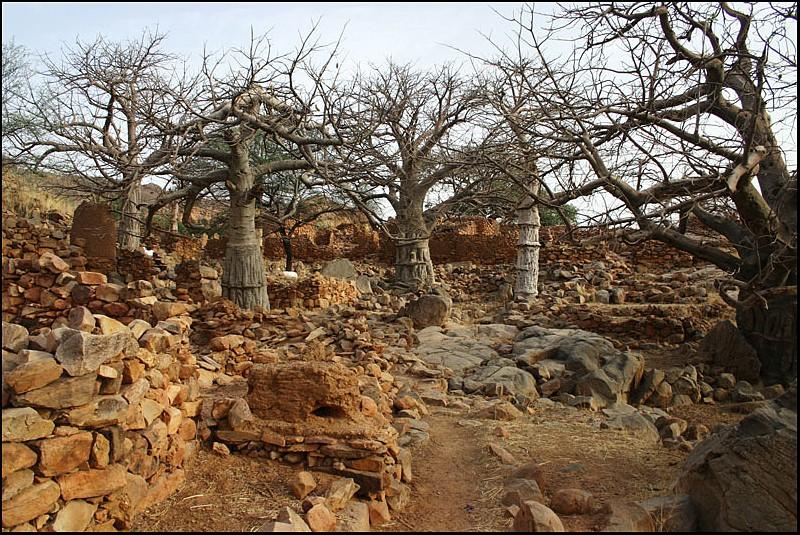 2010 Le pays Dogon en Acadiane 4x4   Baobab11