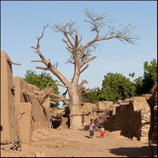 2010 Le pays Dogon en Acadiane 4x4   Mali-p22