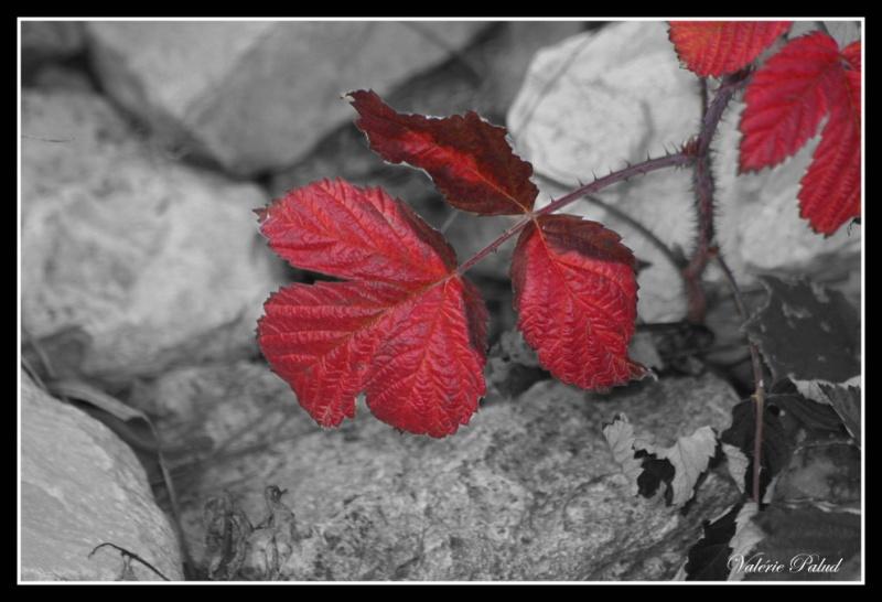 Thème 6 l'automne Stone_28