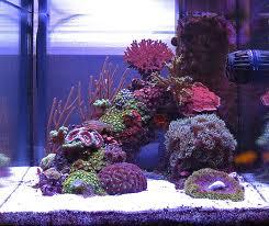 Site sur les nano reef Nanore10