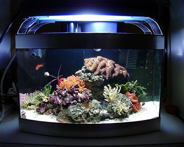 Site sur les nano reef Nanore11
