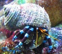Site sur les nano reef Bernar10