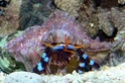 Site sur les nano reef Bernar12
