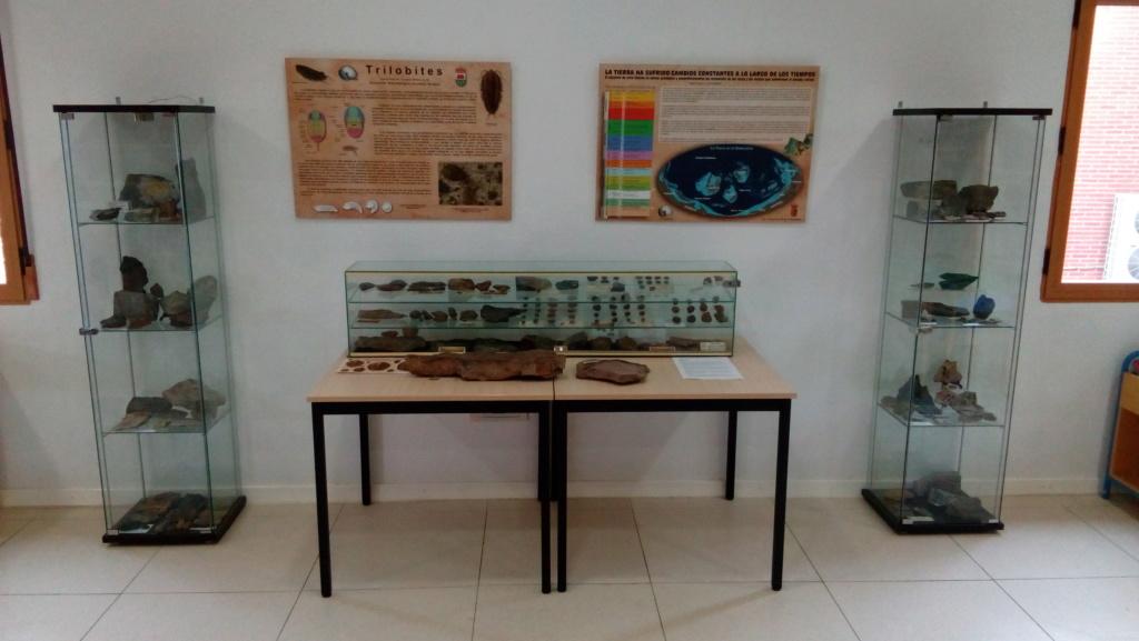 Exposición permanente de los fósiles de los Montes de Toledo en San Martín de Montalbán Img_2016