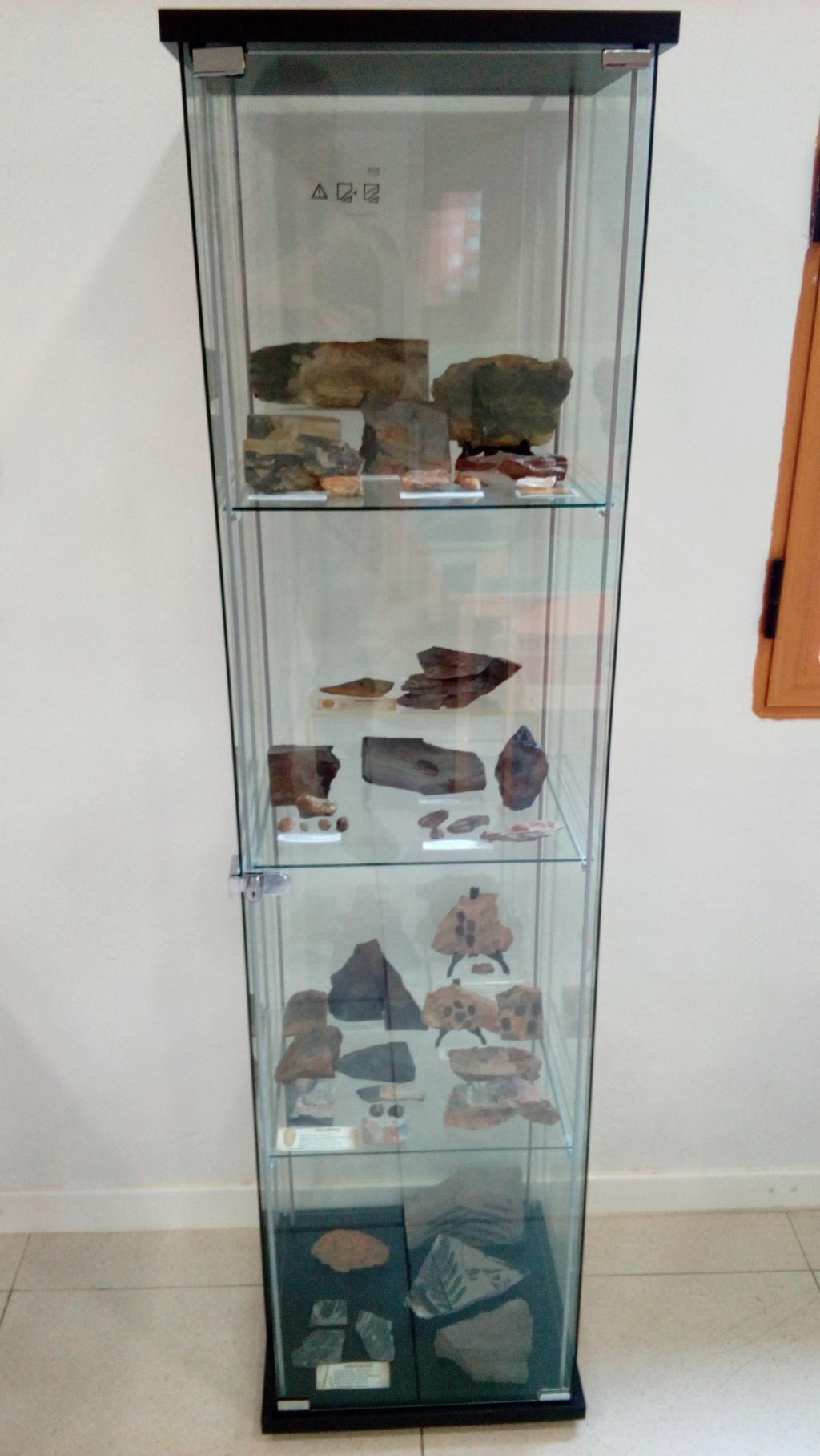 Exposición permanente de los fósiles de los Montes de Toledo en San Martín de Montalbán Img_2019
