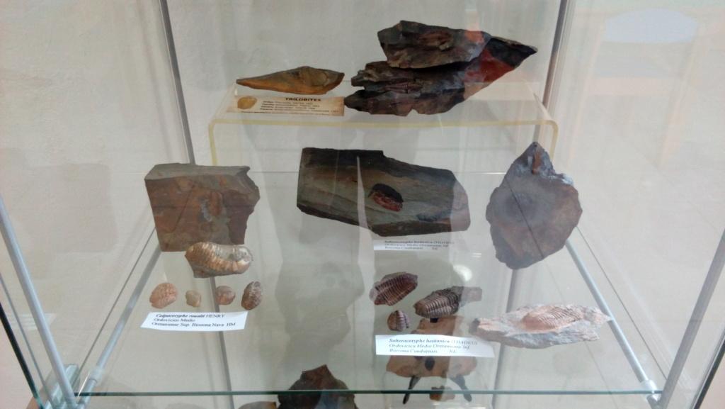Exposición permanente de los fósiles de los Montes de Toledo en San Martín de Montalbán Img_2020