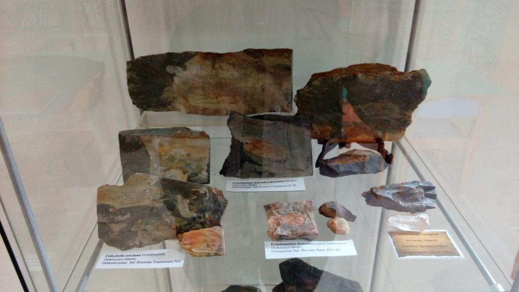 Exposición permanente de los fósiles de los Montes de Toledo en San Martín de Montalbán Img_2021