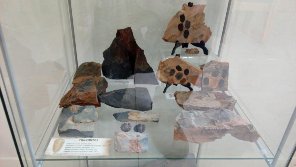 Exposición permanente de los fósiles de los Montes de Toledo en San Martín de Montalbán Img_2022