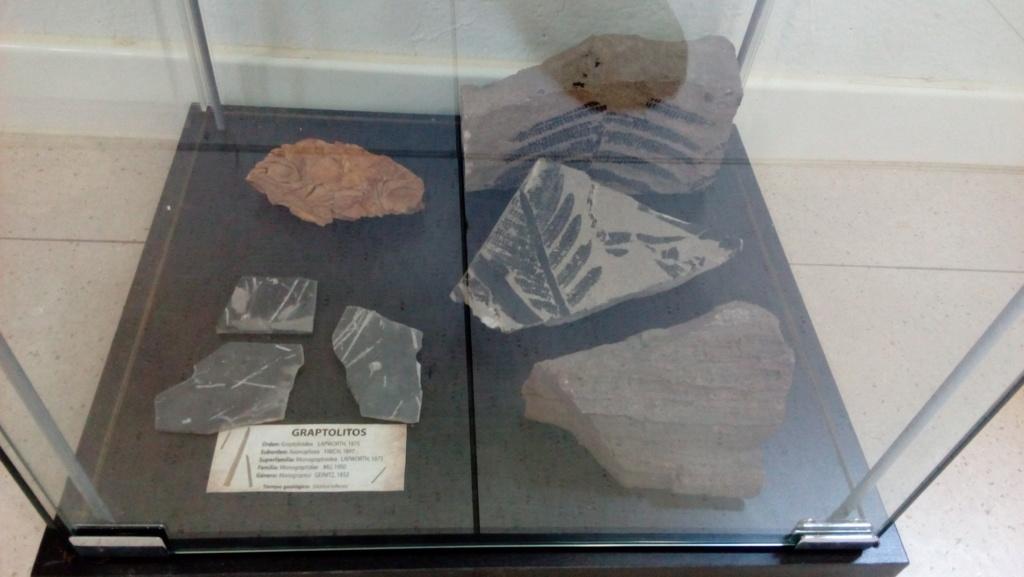 Exposición permanente de los fósiles de los Montes de Toledo en San Martín de Montalbán Img_2024