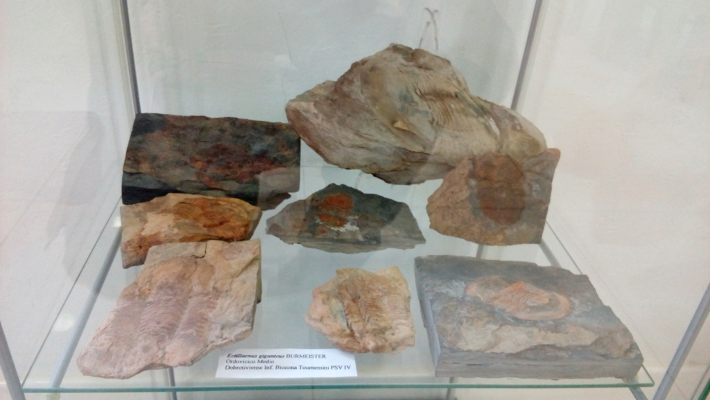 Exposición permanente de los fósiles de los Montes de Toledo en San Martín de Montalbán Img_2026