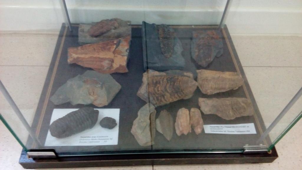 Exposición permanente de los fósiles de los Montes de Toledo en San Martín de Montalbán Img_2027