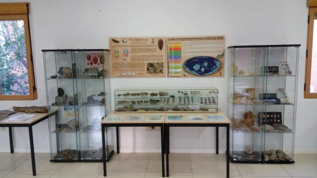 Exposición permanente de los fósiles de los Montes de Toledo en San Martín de Montalbán Thumbn12