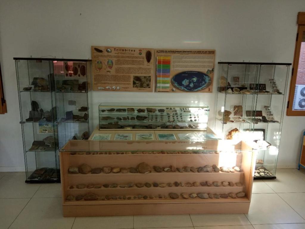 Exposición permanente de los fósiles de los Montes de Toledo en San Martín de Montalbán Thumbn13