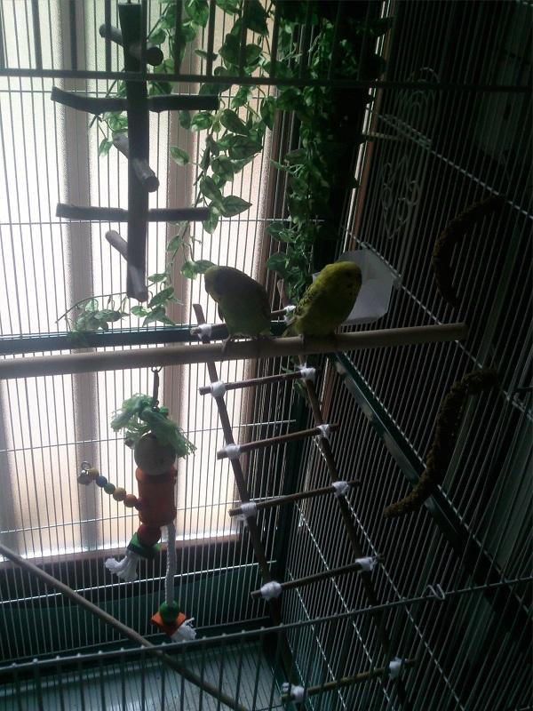 ma nouvelle cage Photo019